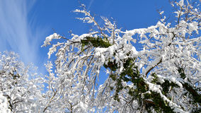 Fruska Gora park narodowy Zdjęcia Stock
