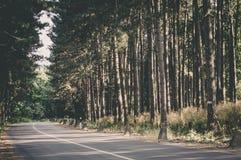 Fruska gora park narodowy, Serbia Fotografia Royalty Free