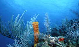 Fruste del mare e spugna gialla fotografie stock libere da diritti