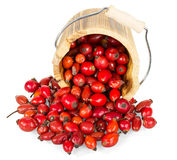 Frustrate wooden bucket and fresh rose hips isolated on  white. Stock Images