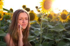 Frustrated girl talking on the phone on among sunflowers at sunset Royalty Free Stock Images