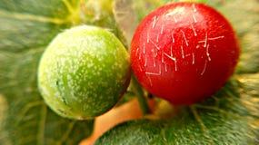 Fruta imagenes de archivo