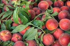 Fruta Foto de archivo libre de regalías