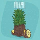Fruta aislada de la piña madura con las rebanadas ilustración del vector