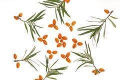 Fruta anaranjada medicinal Fotos de archivo libres de regalías
