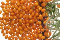 Fruta anaranjada medicinal Fotografía de archivo