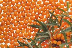 Fruta anaranjada medicinal Foto de archivo
