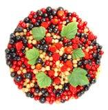 Fruta bonita Fotografia de Stock