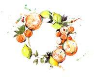 Fruta cítrica, Foto de archivo