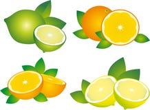 Fruta cítrica Stock de ilustración