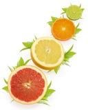 Fruta cítrica imagen de archivo