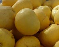 Fruta cítrica de Oroblanco encendido para la venta en mercado de los granjeros Foto de archivo libre de regalías