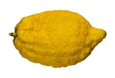Fruta cítrica del limón aislada en blanco Foto de archivo libre de regalías