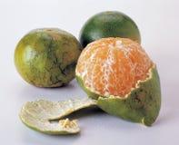 Fruta cítrica del mandarín foto de archivo