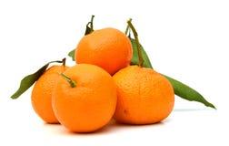 Fruta cítrica madura del mandarín Foto de archivo libre de regalías