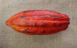 Fruta - Cacoa imagen de archivo