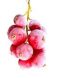 Fruta congelada en hielo foto de archivo