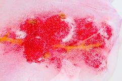 Fruta congelada no gelo Imagem de Stock Royalty Free