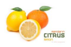 Fruta cítrica: mandarina, limón Imágenes de archivo libres de regalías