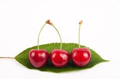 Fruta da cereja Fotografia de Stock