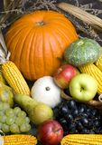 Fruta da colheita foto de stock
