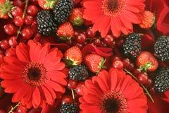 Fruta da floresta Foto de Stock Royalty Free