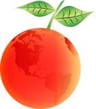 Fruta da laranja do mundo Ilustração do Vetor