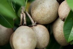 Fruta da paixão Foto de Stock