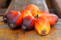 Fruta da palma fotografia de stock