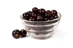Fruta da passa de Corinto preta Foto de Stock