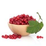 Fruta da passa de Corinto vermelha Fotos de Stock