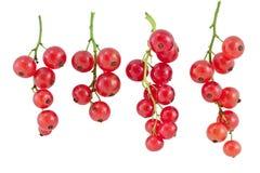 Fruta da passa de Corinto vermelha Foto de Stock Royalty Free