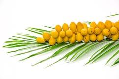 Fruta da tâmara Foto de Stock