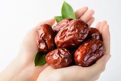 Fruta da tâmara secada Imagem de Stock Royalty Free