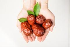 Fruta da tâmara secada Imagens de Stock