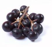 Fruta de Aronia en el fondo blanco Fotos de archivo libres de regalías