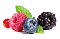 Fruta de baga imagens de stock royalty free