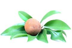 Fruta de Chikoo fotos de archivo libres de regalías