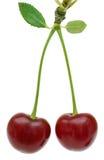 Fruta de dos cerezas en blanco Fotos de archivo