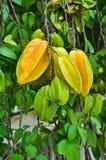 Fruta de estrela Fotografia de Stock