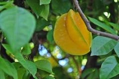 Fruta de estrella Imagenes de archivo