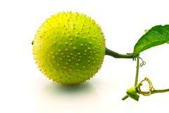 Fruta de Gac con la hoja Imagen de archivo libre de regalías