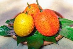 Fruta de Gac en el plato de madera Fotos de archivo
