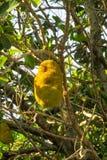 Fruta de Jack en el árbol fotografía de archivo
