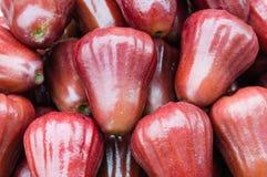 Fruta de Jambu Fotos de archivo libres de regalías