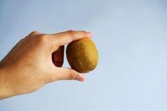 Fruta de kiwi de la explotación agrícola de la mano Imagen de archivo libre de regalías