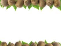 Fruta de kiwi jugosa en el fondo blanco en la frontera de la imagen con el espacio de la copia para el texto Imagen de archivo libre de regalías