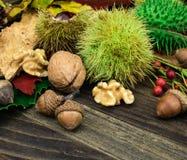 Fruta de la caída con la castaña y las nueces Fotos de archivo