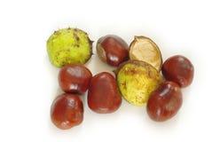 Fruta de la castaña de Indias f Foto de archivo libre de regalías