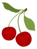 Fruta de la cereza ilustración del vector